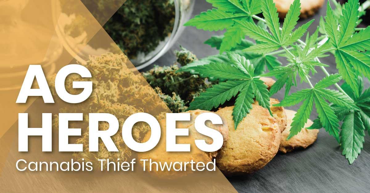 cannabis_thief_thwarted_fb